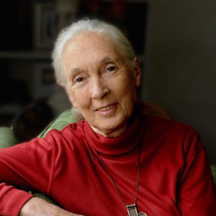 Jane Goodall, DBE